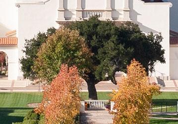 Oak tree on the California quadrangle