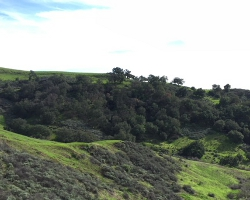 Trees and hillside