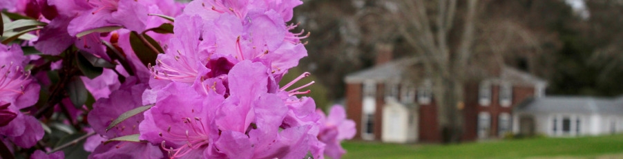 Slideshow: Spring on the New England Campus — <br>for now