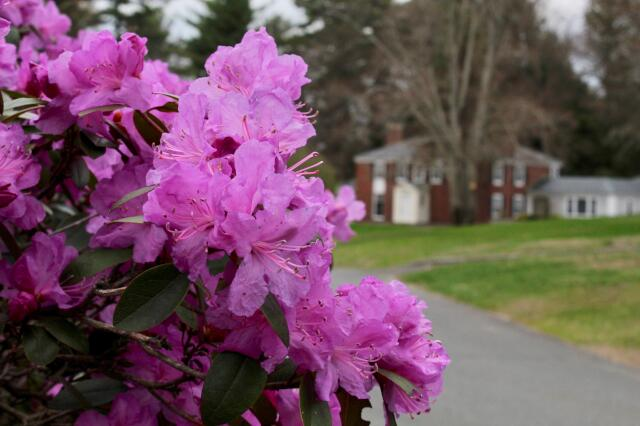 Flowers in New England 2020